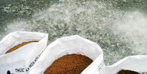 Chứng nhận hợp quy cơ sở sản xuất thức ăn công nghiệp thuỷ sản