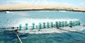 Chứng nhận VietGAP thủy sản
