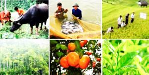 Chứng nhận VietGAP lĩnh vực trồng trọt