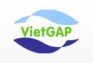 VIETGAP: Lịch sử ra đời và phát triển